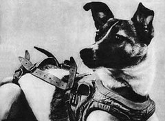 Laika, First Animal in Orbit