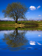 fallen into the blue (myfear) Tags: blue sky cloud reflection tree topf25 topv111 topv2222 photoshop topf50 topv555 topv333 bravo topv1111 topv999 drop explore topv5555 topv777 topv9999 topv3333 topv4444 topf100 soe topv8888 topv6666 topv7777 blueribbonwinner outstandingshots flickrsbest abigfave anawesomeshot holidaysvacanzeurlaub diamondclassphotographer flickrdiamond highestposition3onthursdaymarch292007