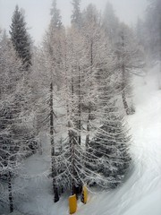 Snowy trees (snafflemeister) Tags: trees snow courmayeur