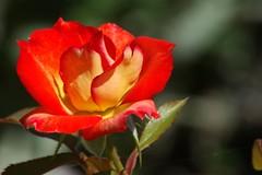 Betty_4133-full (Ranj Niere) Tags: june05 floraandfauna