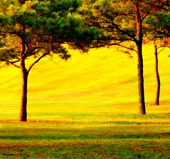 Before 8 AM [Three Trees] (slight clutter) Tags: morning trees color grass sunrise topf75 iloveflickr slightclutter before8am katyahorner slightclutterphotography