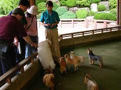 caninevillage3 (Cazhole) Tags: seoul everland animals zoo lions bears feeding