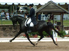 USEF Championships 6-16-2005, Grand Prix -- George Williams and Rocher (Rock and Racehorses) Tags: dressage nj extended trot gladstone horse usef freestyle canter pirouette piaffe passage