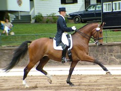 USEF Grand Prix Freestyle 6-18-2005 -- Pierre St Jacques and Lucky Tiger (Rock and Racehorses) Tags: horse pirouette piaffe passage warmblood nj jersey gladstone freestyle dressage canter usef