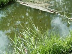 Forellenangeln in Dänemark (5) (Yogi 58) Tags: fishing bach brook dänemark exciting angeln yogi58 spannung forellenangeln jörgsteiof steiof