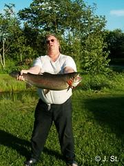 Forellenangeln in Dänemark (7) (Yogi 58) Tags: denmark trout dänemark rainbowtrout forelle angeln yogi58 forellenangeln regenbogenforelle jörgsteiof steiof riesenfisch
