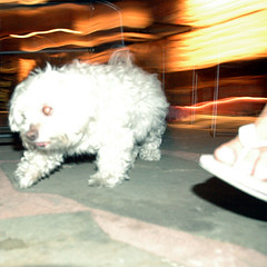 pet mop (Brunocerous) Tags: 2005 nyc pets newyork dogs nycpb june topv111 floors restaurant bars creepy queens