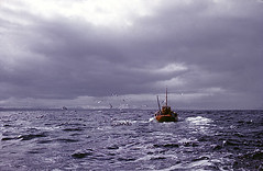 Pentland Firth, Scotland, 1963 (PhillipC) Tags: sea 1025fav scotland fishing trawler 1963 caithness 1111v11f 10faves