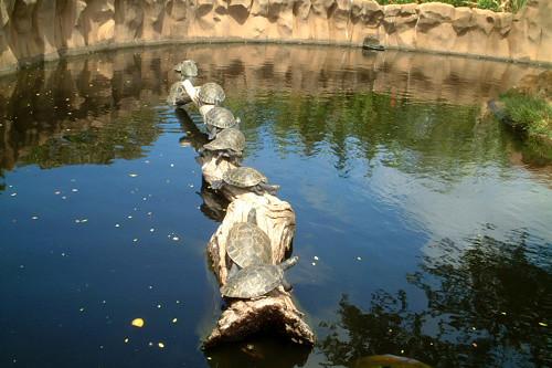 turtles line
