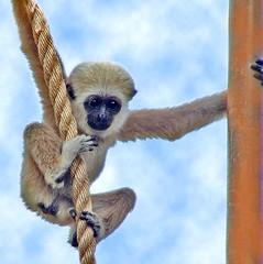 Babe (hodad66) Tags: hawaii animal honolulu zoo waikiki