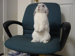 I'm Cute! (MPR529) Tags: cute rabbit bunny stand chair adorable cracker interestingness62805