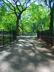 path-trees-and-shadows by Aaron Edwards, on Flickr