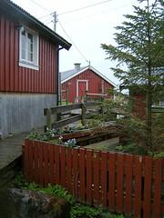 svinya rorbuer (nordlys) Tags: norway svinya svolvar rorbu rorbuer lofoten
