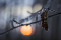 Sunrise in frosted nature (Fabien Husslein) Tags: sunrise lever soleil nature hiver winter frost gel givre bokeh sun branch branche leaf feuille forest foret bois wood morning matin light lumiere