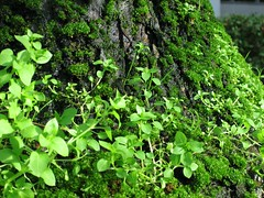 I'm in Love with Green (brydges_s) Tags: green tree plant moss colour nature stump base weeds