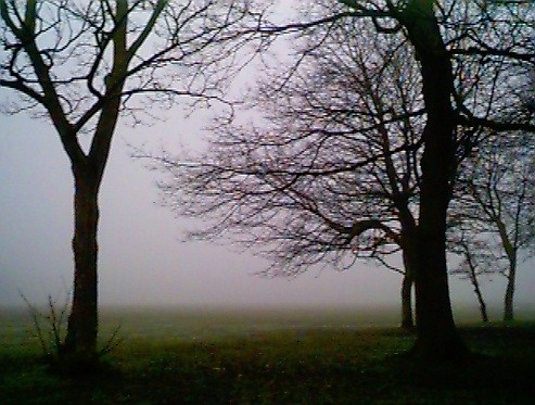 Fog in Sefton Park