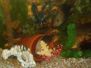 Kinship Circle - 2006-12-23 - 14 - Fish