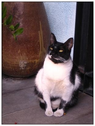 胡同的貓咪1