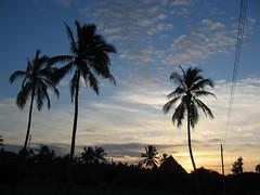 Palmen (aj82) Tags: africa palms tanzania daressalaam indianocean palm afrika palme palmen tag8 tansania indischerozean