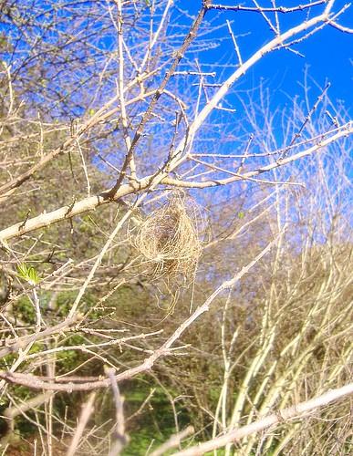 Wren Nest