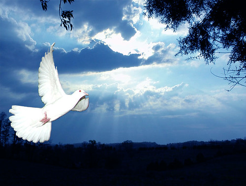 of a white dove flying