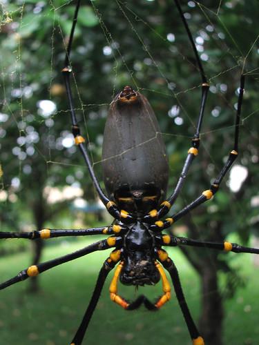 Giant spider eating bird - photo#23