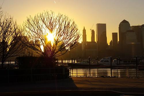 sun-tree-raw.jpg