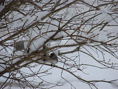 Picture 272 (dale4232000) Tags: snow tree bird alone