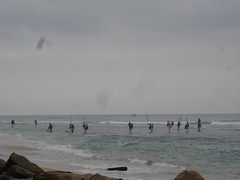 Sri Lankan pole fishermen