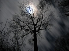 moonlight tree (MasterGeorge) Tags: light moon tree silhouette night cliffs moonlight scientists