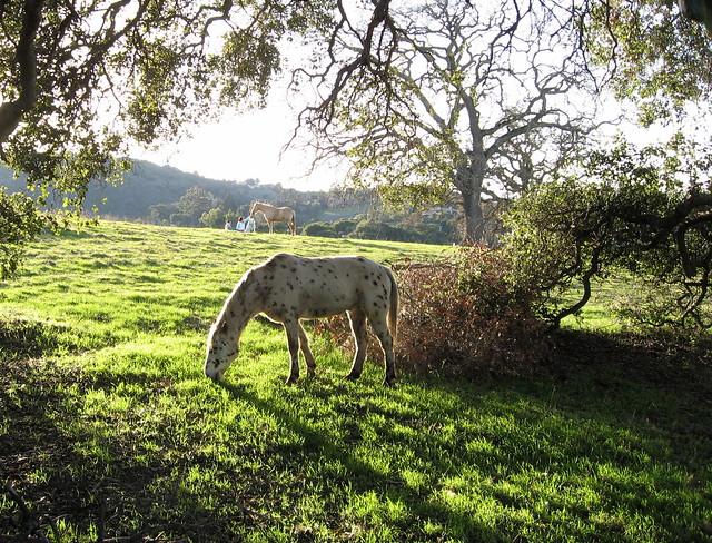 Pferd im Eichenhain