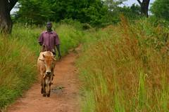 IMG_5846 (LindsayStark) Tags: africa travel boy people animals war conflict uganda humanrights humanitarian displaced idpcamp refugeecamp idps idp humanitarianaid emergencyrelief idpcamps waraffected