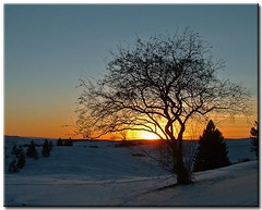 Another January Sunset (1) (Roger Lynn) Tags: winter sunset snow tree moscow branches arboretum idaho universityofidaho palouse shieldofexcellence