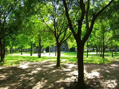 夏天的大安森林公園