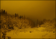 as the time had stopped ... ([ Petri ]) Tags: winter snow night forest finland luminous top20longexposure myforestbackyard laitmanintie