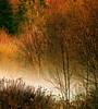 Marshland mist / Brume des marais