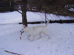 tala cody backyard snow 050