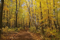 Forest Trail (Jim's outside photos) Tags: autumn color fall nature minnesota yellow forest bravo photos outdoor trail atv outdoorphotos outdoorphotography nemadji outstandingshots jimbrekke jimsoutsidephotos abigfave nemadjistateforest jimbrekkecom jamesbrekkecom