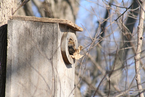 squirrels in tree house 02