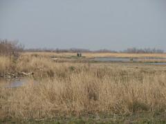 Deux Hérons (kahala) Tags: bike marsh vélo herons étang camargue balade arlesbykahala