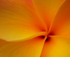 Flower Centre (Thiru Murugan) Tags: red orange flower macro yellow closeup central murugan thiru thirumurugan thiruflickr