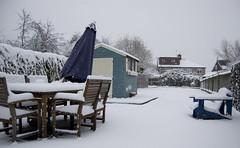 Snow! (Adam Mulligan) Tags: snow d50 nikon snowday dayoff 18mm f35 snooow 1855mmf35g