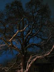 snowytreeinnight_5 (AlfaLori) Tags: winter snow tree night nightshot snowy nightscene warmlight