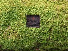 (streuwerk) Tags: sculpture art landscape schweiz natural outdoor kunst natur environmental creation workshop land rheintal baum ephemeral moos landart quadrat naturart naturkunst landkunst horberpatrick