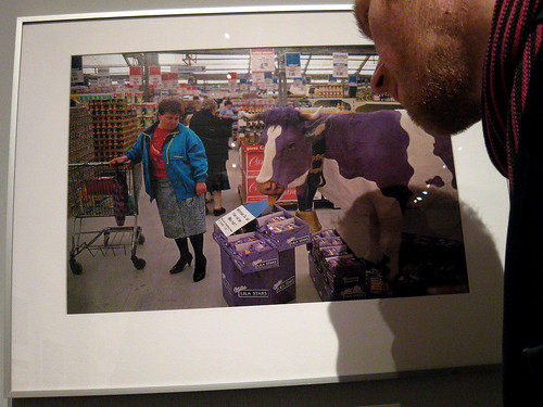 Milka Cow featuring Toby.