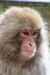Jigokudani (nataliegoes) Tags: japan monkey onsen nagano jigokudani macaque japanesemacaque yaenkoen nanano