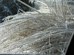 icy grasses