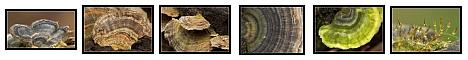 Fungi, by Alex with Nikon D70 + Sigma 180mm macro lens