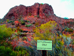 Literate Snakes Only (oybay) Tags: arizona cactus mountain color sign rocks rocky hills boycethompsonarboretum rattlesnakes colros