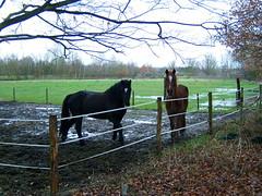 Horses (LHOON) Tags: walking belgium belgique hiking walk belgi gr12